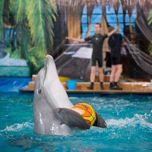Дельфинарии, океанариумы Старой Купавны