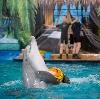 Дельфинарии, океанариумы в Старой Купавне